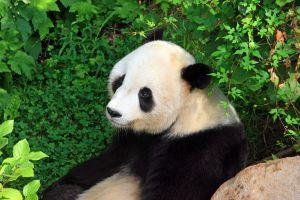 Google's Panda Updates SEO